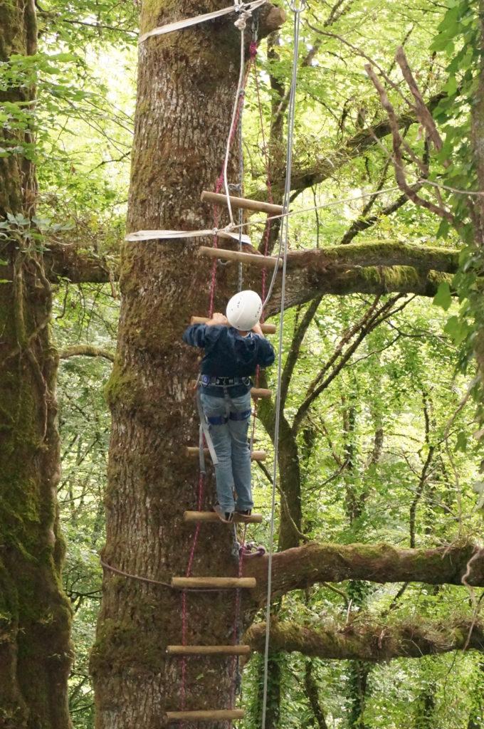 grimpe d'arbres encadrée uzerche